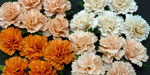 Wild Orchid Crafts Carnations Mixed Peach/Orange RESTOCKED!