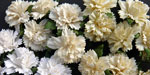 Wild Orchid Crafts Carnations Mixed White/Cream