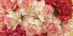Wild Orchid Craft 25mm Cottage Roses Mixed Pink RESTOCKED!