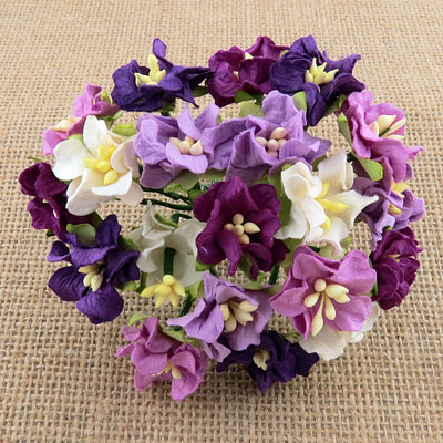 Miniature Gardenias Mixed Purple