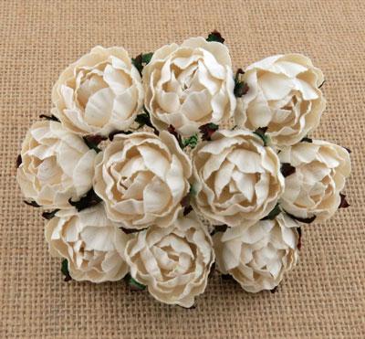 Peony Flowers Ivory