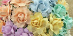 Wild Orchid Craft 25mm Cottage Roses Mixed Pastel