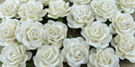 Wild Orchid Crafts 35mm Trellis Roses White
